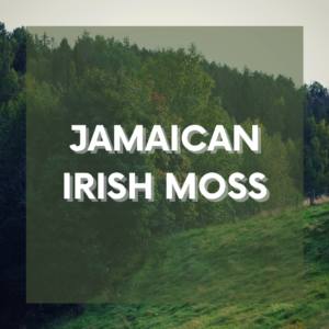 Irish Moss / Sea Moss