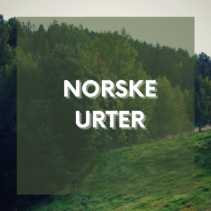Norske urter