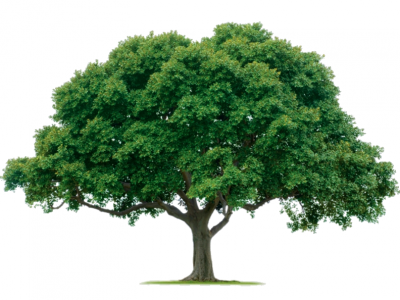 86-861003_tree-png-1000-pics-oak-tree-png